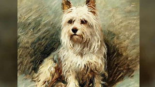12 Fun and Furry Facts on the Yorkie | Rare Animals - Video