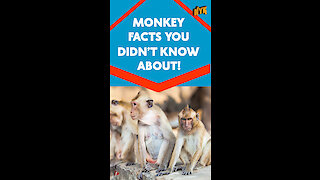 Top 4 Awesome Facts About Monkeys *