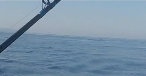 Family Panics When Whales head for the Fishing Rod!