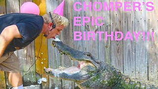 Chomper the Alligator Celebrates Birthday in Style - Video