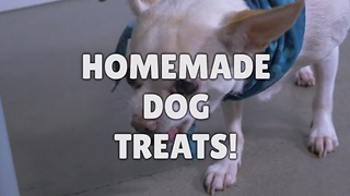How to make your own dog treats! - Video