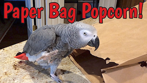 Snack-loving parrot imitates popping popcorn sounds