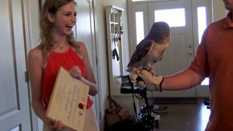 Owl Delivers Hogwarts Diploma To Graduate Student Obsessed With Harry Potter