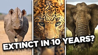10 Animals That May Go Extinct In The Next 10 Years - Video