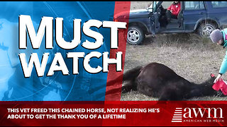 This Vet Freed This Chained Horse, Not Realizing He's About To Get The Thank You Of A Lifetime - Video