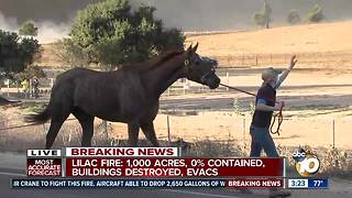 Horses being evacuated amid Lilac Fire - Video