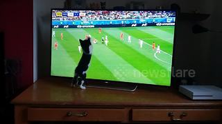 Playful Kitty Tries To Catch A Soccer Ball On The TV Screen - Video