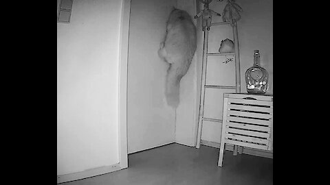 Cat trying to open bedroom door meowing waking up humans on surveillance cam