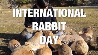 International Rabbit Day - The Ultimate Cute Bunny Compilation - Video