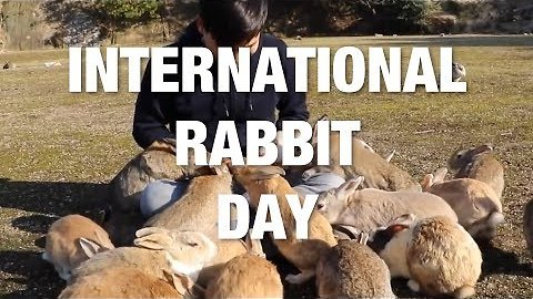 International Rabbit Day - The Ultimate Cute Bunny Compilation