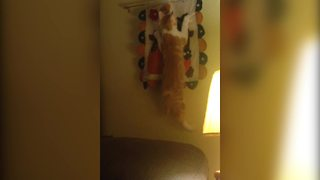 """Funny Cat Hangs From Fabric Piece on Wall"""