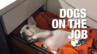 Everyday Should be Bring Your Dog to Work Day - Video
