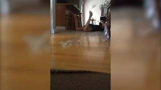 Girl Epic Fails At Pranking Cat - Video