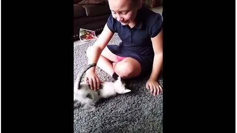 Little Girl Is Sent Into A Crying Fit Over Kitten Surprise