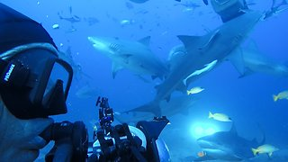 Divers Become Completely Surrounded By Bull Sharks
