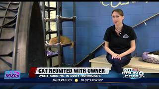 Man reunited with cat 14 years after disappearance - Video