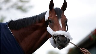 Country house to miss preakness