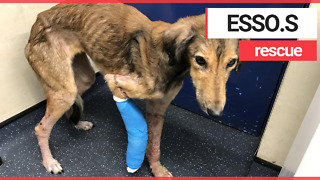 A dog has been rescued after it was caught on CCTV wandering starving and injured