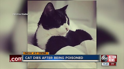 Cat dies after being left in home during termite treatment
