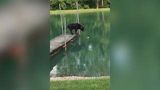 Intelligent Dog Hates Water But Loves His Tennis Ball - Video
