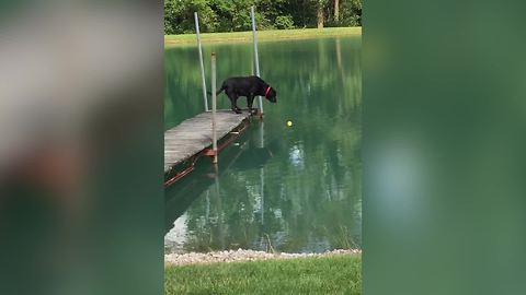 Intelligent Dog Hates Water But Loves His Tennis Ball
