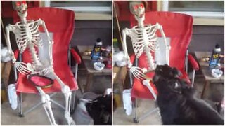 Funny moment dog tries to play with a skeleton