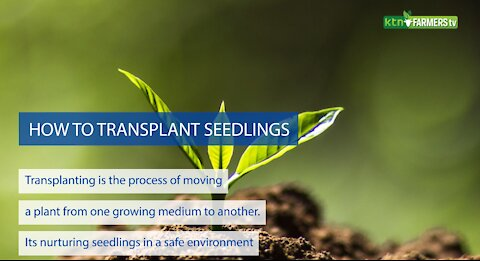 How to Transplant Seedlings - Guide