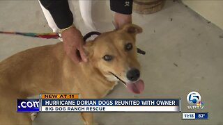 Hurricane Dorian Dogs Reunited with Owner