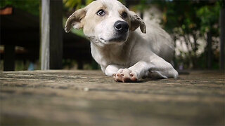 Scientists seek 10,000 dogs for aging study