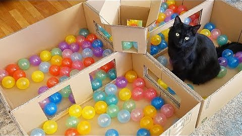 Make Your Own Deluxe Ball Pit To Keep Your Cat Entertained For Days