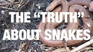 "The ""Truth"" About Snakes - Video"
