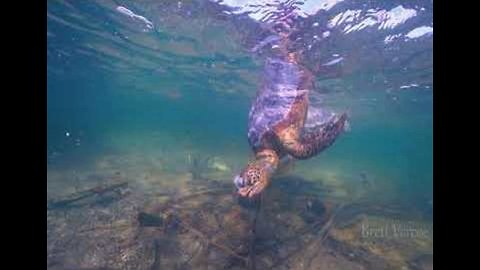 Diver Captures Heartbreaking Video of Sea Turtles Killed by Marine Waste