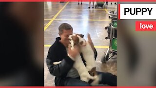 Adorable moment dogs greet owner at airport arrivals
