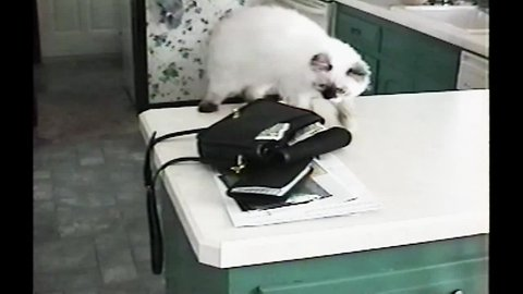 Cat Burglar Steals Money from Purse