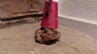 Creative animal lover designs tiny hat for toad – and it fit perfectly