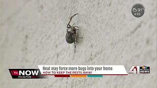 Heat may force more bugs into your home - Video
