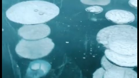 Mesmerizing Frozen Methane Bubbles Form In Alberta Lake