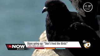 Signs going up: Don't feed the birds - Video