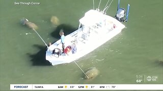 Drone video shows Florida boater using pole to harass manatee
