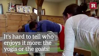 Yoga With Goats | Rare Animals - Video