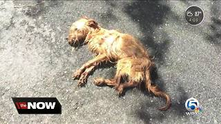 Dog fighting to survive after being abandoned