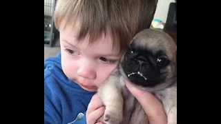 Puppy Love For This Boy and His Pet Pug - Video