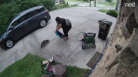 Nest Cam captures woman's scary encounter with a raccoon