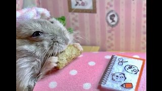 Elderly Hamster Relaxes With a Treat