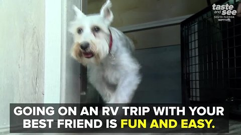 Tips to go RVing with your dog