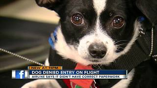 Tampa woman misses flight over emotional support animal mix-up - Video