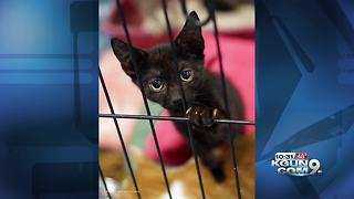 Nine kittens rescued from Puerto Rico after Hurricane Maria up for adoption - Video