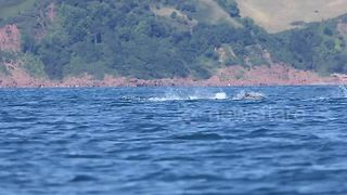 Kayaker has close encounter with pod of dolphins off English coast