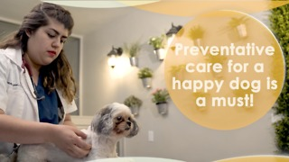 Preventative care for a happy dog is a must! - Video