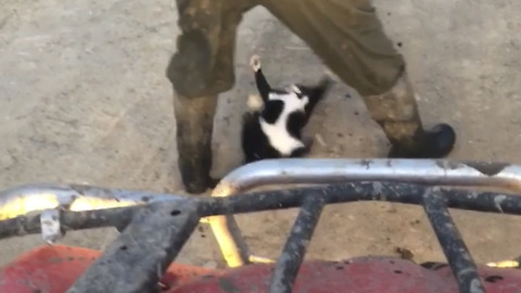 Farm cat hilariously plays in dirt to block road passage